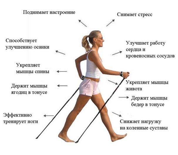 Скандинавская Ходьба Похудения. Скандинавская ходьба для похудения: польза и правильная техника